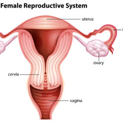 Ectopic Pregnancy and IVF: A Recent Risk Reduction