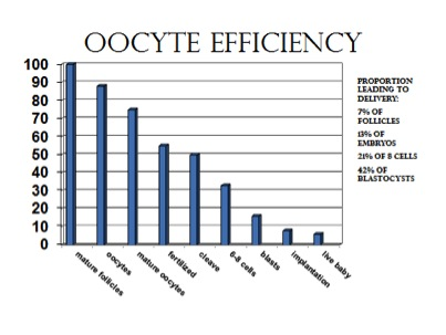 graphic-graph-oocyte-efficiency